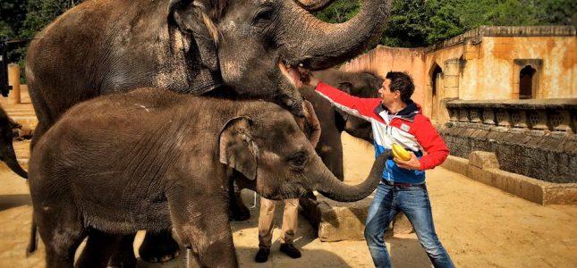 André Gatzke bei den Elefanten im Zoo Hannover
